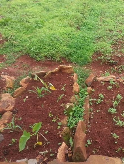 Champ cultivé par des prisonniers à Bamenda